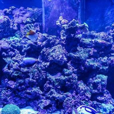 Океанариум в ТРЦ «Рио» Profile Picture